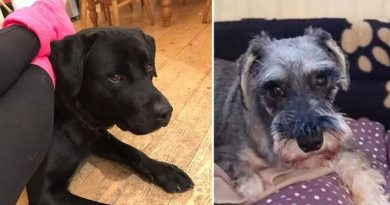 Three sets of dog owners in a panic after their pets disappear